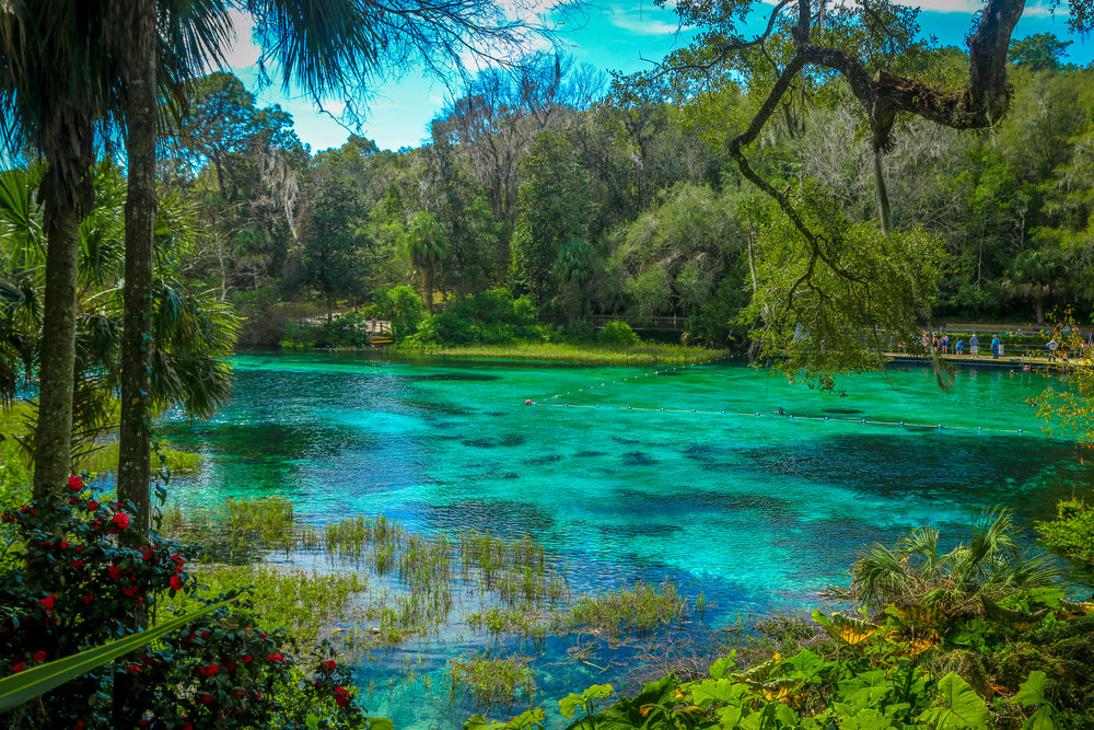 Gorgeous View Of Rainbow Springs State Park