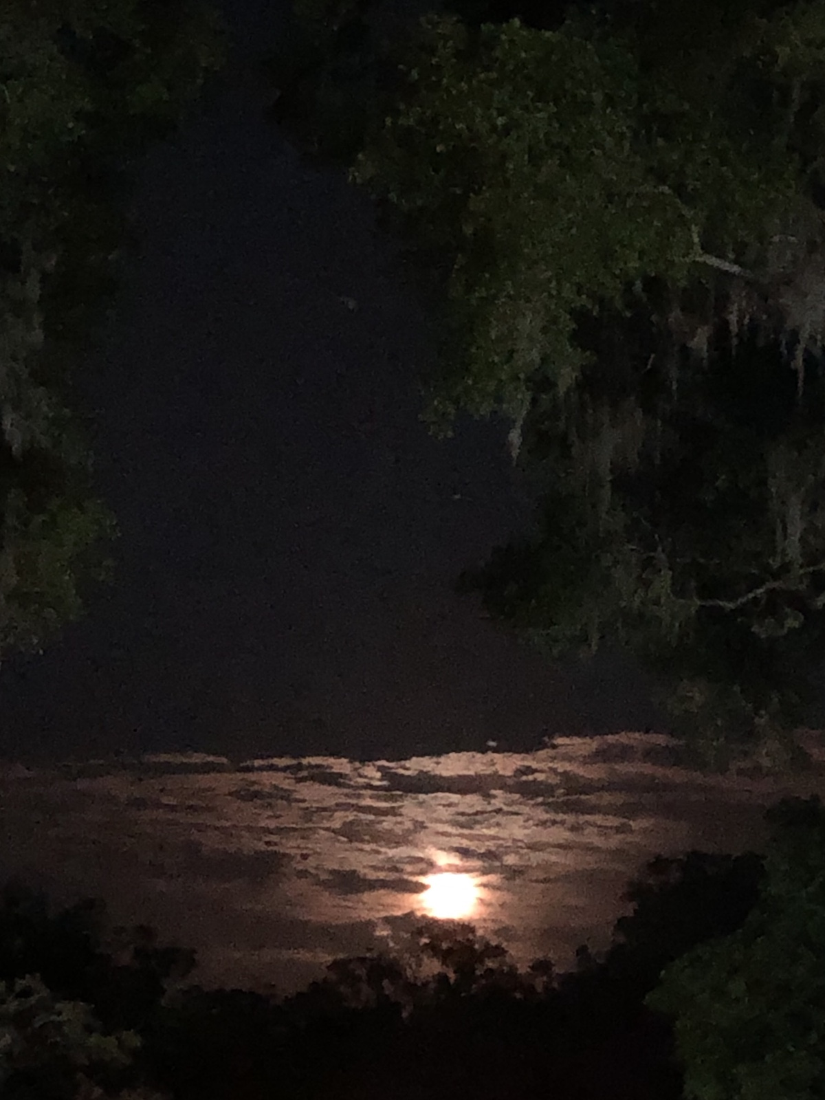 Chasing The Moon In Belleview